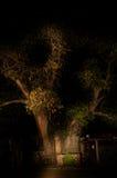 Árbol del baobab de The?Ombalantu en Namibia Foto de archivo