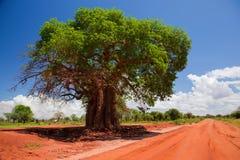 Árbol del baobab en el camino rojo del suelo, Kenia, África Imagen de archivo