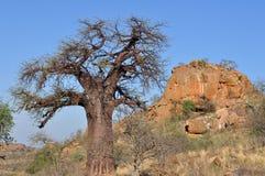Árbol del baobab en paisaje africano Foto de archivo