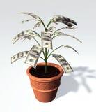 Árbol del billete de banco de cientos dólares pequeño en un florero Foto de archivo libre de regalías