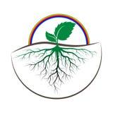 Árbol del brote con la raíz Imagen de archivo
