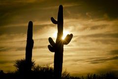 Árbol del cactus del saguaro de la salida del sol del desierto Fotos de archivo libres de regalías