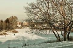 Árbol del callejón del invierno de la ciudad Fotografía de archivo libre de regalías
