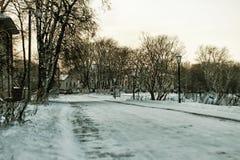 Árbol del callejón del invierno de la ciudad Fotos de archivo