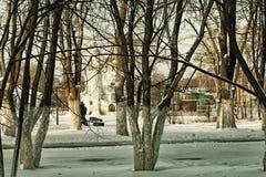 Árbol del callejón del invierno de la ciudad Imagen de archivo