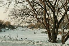 Árbol del callejón del invierno de la ciudad Fotos de archivo libres de regalías