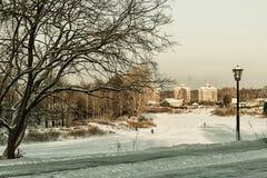 Árbol del callejón del invierno de la ciudad Foto de archivo libre de regalías