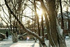 Árbol del callejón del invierno de la ciudad Fotografía de archivo
