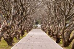 Árbol del camino y del túnel Fotos de archivo