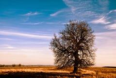 Árbol del campo Imagen de archivo libre de regalías