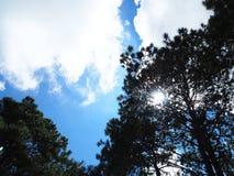 Árbol del cielo imagen de archivo libre de regalías