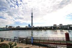 Árbol del cielo de Tokio Fotos de archivo
