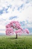 Árbol del color rosado Imagen de archivo