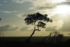 Árbol del contraluz Fotos de archivo libres de regalías