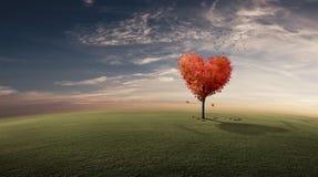 Árbol del corazón Imagenes de archivo