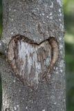 Árbol del corazón imágenes de archivo libres de regalías