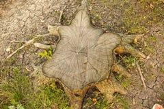 Árbol del corte Foto de archivo