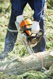 Árbol del corte del leñador en bosque Foto de archivo libre de regalías