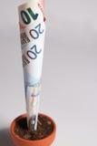 Árbol del crecimiento euro de los billetes de banco Fotos de archivo libres de regalías