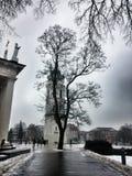 Árbol del cuadrado central de Vilna fotografía de archivo