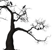 Árbol del cuervo Foto de archivo libre de regalías