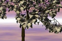 Árbol del dólar fotografía de archivo libre de regalías