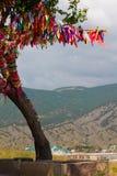 Árbol del deseo Foto de archivo libre de regalías