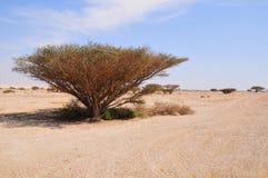 Árbol del desierto. Fotografía de archivo