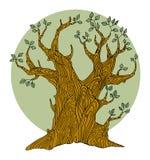 Árbol del dibujo de la mano Imagenes de archivo