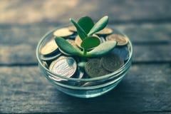 Árbol del dinero con las monedas en el fondo de madera Imágenes de archivo libres de regalías