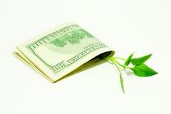 Árbol del dinero cubierto fotos de archivo