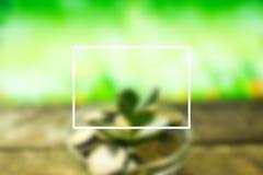 Árbol del dinero en un fondo de la primavera en de madera Imagen de archivo