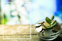 Árbol del dinero en un fondo de la primavera en de madera Foto de archivo libre de regalías
