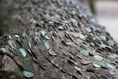 Árbol del dinero libre Fotografía de archivo libre de regalías