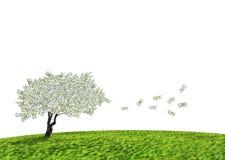 Árbol del efectivo del dólar Fotos de archivo libres de regalías