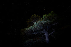 Árbol del enebro en el nuevo mundo imagen de archivo libre de regalías