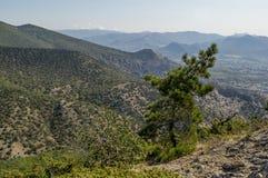 Árbol del enebro en la montaña Fotos de archivo