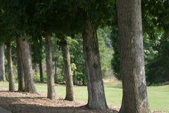 Árbol del espacio abierto del golf alineado foto de archivo
