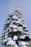 Árbol del extremo de la nieve Imagen de archivo libre de regalías