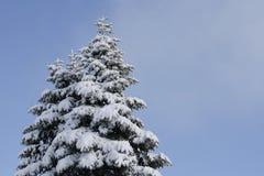 Árbol del extremo de la nieve Imágenes de archivo libres de regalías