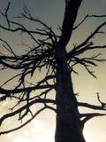 Árbol del fantasma foto de archivo libre de regalías