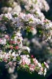 Árbol del flor Foto de archivo libre de regalías