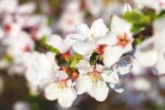 Árbol del flor Imágenes de archivo libres de regalías