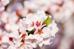 Árbol del flor Fotos de archivo