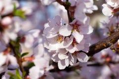 Árbol del flor Imagen de archivo libre de regalías