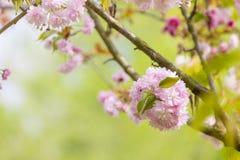 Árbol del flor sobre fondo de la naturaleza imagen de archivo