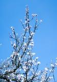 Árbol del flor sobre fondo de la naturaleza Apenas llovido encendido imagen de archivo