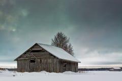 Árbol del granero y de abedul en un día de invierno frío Fotos de archivo libres de regalías
