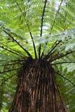 Árbol del helecho Fotos de archivo