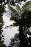 Árbol del helecho Foto de archivo libre de regalías
